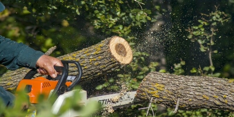 best chainsaw for cutting firewood1